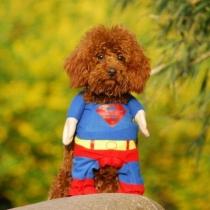 Vêtement de Chien Superman Pour l'Automne et l'Hiver