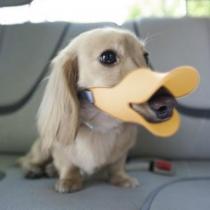 Doux confortable Canard silicone jaune à bec de canard Bouche Anti Mordre Barking Dog Pet réglable Masque de sécurité Cage Museau