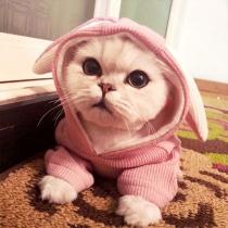Vêtements Pour les Chiens/Chats Doux Mignons à la Mode à Capuche avec les Oreilles de Lapin