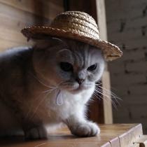 Chapeau de Paille Chic Stylé à la Mode Pour les Animaux